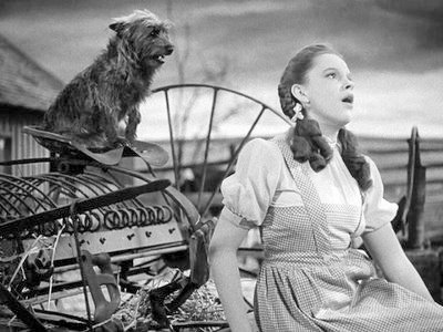 37-Judy Garland-toto-2-e2mt