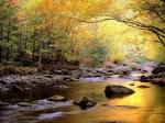 Autumn-brook-1