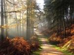 Autumn dirt road through pines