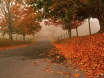 Autumn leaves-country road-1
