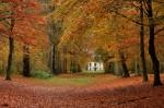 autumn leaves-house, focus-1