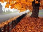 Autumn leaves-iron fence-1