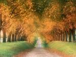 Autumn-Road-cognac-region-france-1-lg