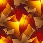 Autumn-Sun-for-Leesia-31000