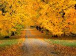 autumn_by_zedi360