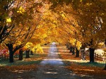 Autumn_road-country-3