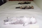 cats-sleeping-on-backs-f11
