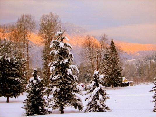 winter-trees-sun on hills-1a